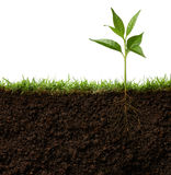 Plant with roots Royalty Free Stock Photos