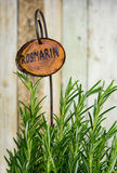 Plant with Rosemary with a wooden name sign. Plant with Rosemary with a wooden name sign as kitchen herb Royalty Free Stock Images