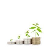 Plant on row of coin money on white background. Stock Photos