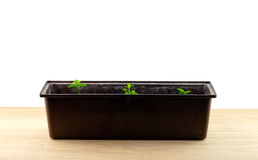 Plant row in pot Royalty Free Stock Photography