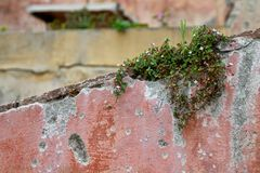 Plant on a ruined wall Stock Photos