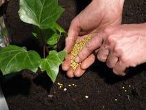 Plant's fertilization stock photo