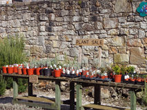 Plant Sale in Culross Palace Royalty Free Stock Images