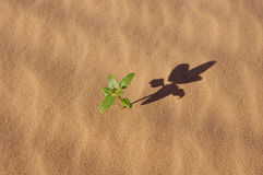 Plant in the sand of desert Royalty Free Stock Photo