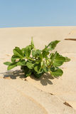 Plant in Sand. Green plant grow up in sand Royalty Free Stock Photography