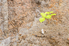 Plant on sand Royalty Free Stock Images