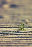 Plant in the sand. A lonely plant in the desert of sand Stock Photos