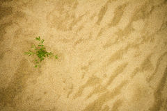Plant on sand Stock Photo
