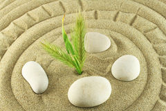 Plant, sand and stone Stock Image