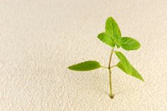 Plant on sands Stock Photography