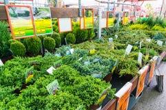 Plant saplings for sale Stock Photos