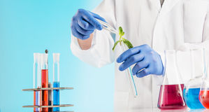 Plant sciences in lab Stock Images