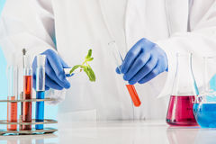 Plant sciences in lab Royalty Free Stock Photos