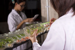 Plant scientist. Two scientists working in lab about growing plant Stock Photo