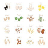 Plant seed icon flat set with pumpkin corn wheat Stock Images