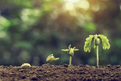 plant seeding growing step with sunlight with vintage tone filter . agriculture concept in farm royalty free stock photos