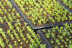 Plant seedling Stock Photography