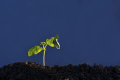 Plant seedling Stock Images