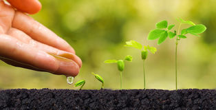 Plant seedling. Agriculture. Plant seedling. Hand nurturing and watering young baby plants growing in germination sequence on fertile soil with natural green Stock Images