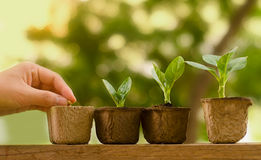 Plant seedling and growing step concept stock photography