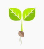 Plant seedling. Plant seedling icon. Vector illustration Stock Images