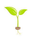 Plant seedling Royalty Free Stock Images