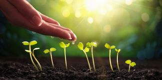 Plant Seedling on Natural Sunny Background Agriculture stock image