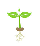 Plant seedling with roots Stock Photography