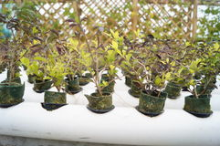 Plant seedlings Stock Image