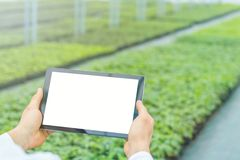 Plant seedlings growing greenhouse spring. Biotechnology engineer hands with tablet royalty free stock photo