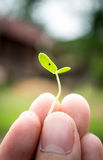 Plant seedlings with hands Royalty Free Stock Images