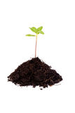 Plant seedlings Stock Photo