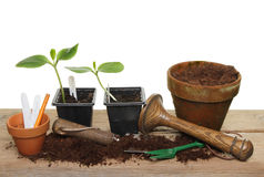 Plant seedlings and tools Royalty Free Stock Photography