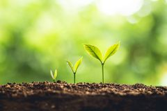 Plant Seeds Planting trees growth,The seeds are germinating on good quality soils in nature royalty free stock image