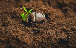Plant Seeds Planting trees growth,The seeds are germinating on good quality soils in nature royalty free stock photos
