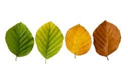 Plant senescence Stock Photos