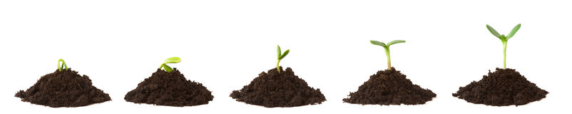 Plant Sequence on Dirt Piles. Sequence of a plant sprouting/growing on piles of dirt, white background Royalty Free Stock Photo