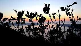Plant shades in Santorini, Greece. royalty free stock photography