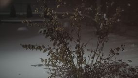 The plant shakes in the wind. Bush with leaves in winter stock video footage