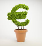 Plant shaped like a Euro currency symbol. Pot plant shaped like a Euro currency symbol Royalty Free Stock Photography