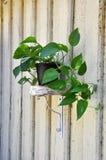 Plant and shelf Royalty Free Stock Photo