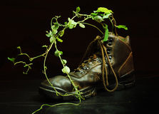 Plant in shoe Stock Photos