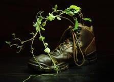 Plant in shoe stock photos