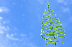 Plant shoot with blue sky Royalty Free Stock Images