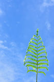 Plant shoot with blue sky Royalty Free Stock Image