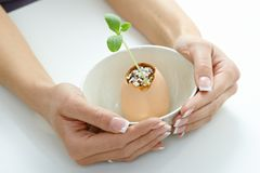 Plant shoot in eggshell in bowl cupped by hands Stock Photos