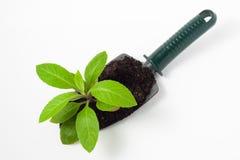 Plant on a Shovel Stock Image