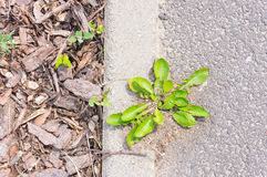 Plant and sidewalk Royalty Free Stock Photo