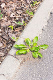 Plant and sidewalk Stock Photo
