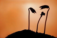 Plant silhouette Royalty Free Stock Images